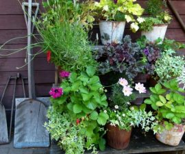 gardening ideas and plants
