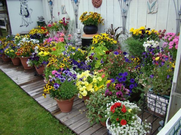 small yard Decorate with Containers