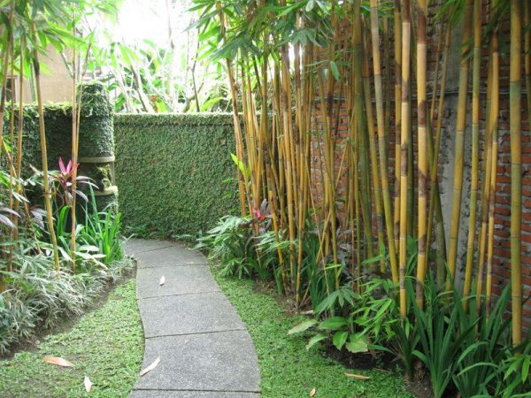 side yard plant with bamboo